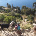 road trip... ou plutôt lake trip sur le lac titicaca entre Pérou et Bolivie