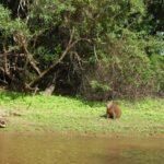 Road trip Amazonie Bolivie - voyage Amérique du Sud
