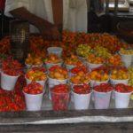 Road trip Brésil - Fortaleza, Belem et Oiapoque - Voyage Amérique du Sud