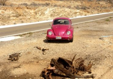 ROAD TRIP BAJA CALIFORNIA EN COCCINELLE - 2012